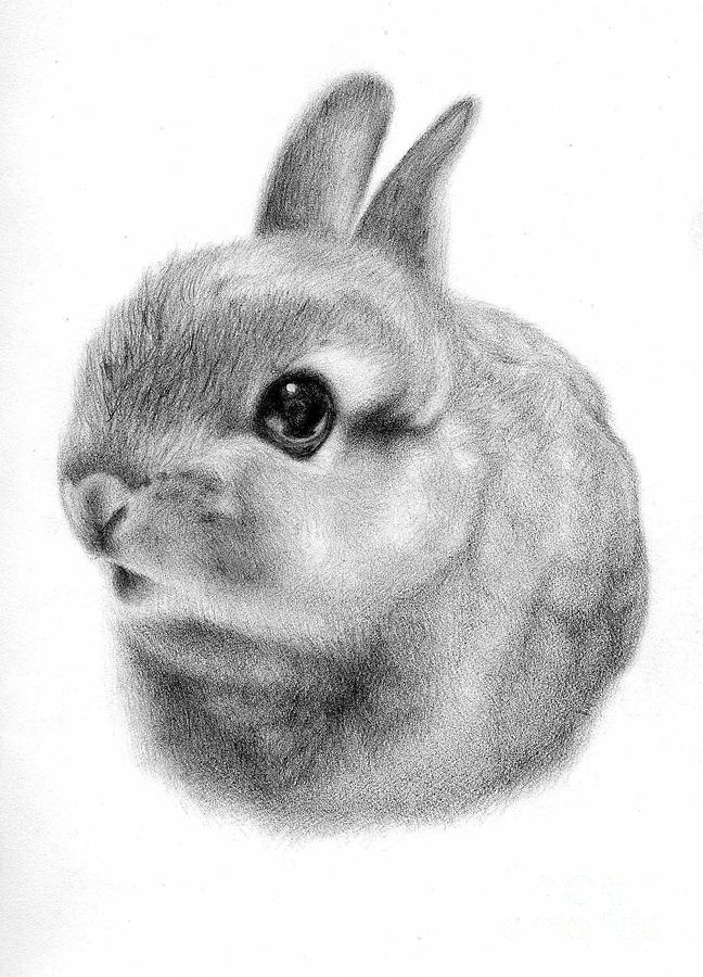 bunny drawing cute bunny drawings in pencil