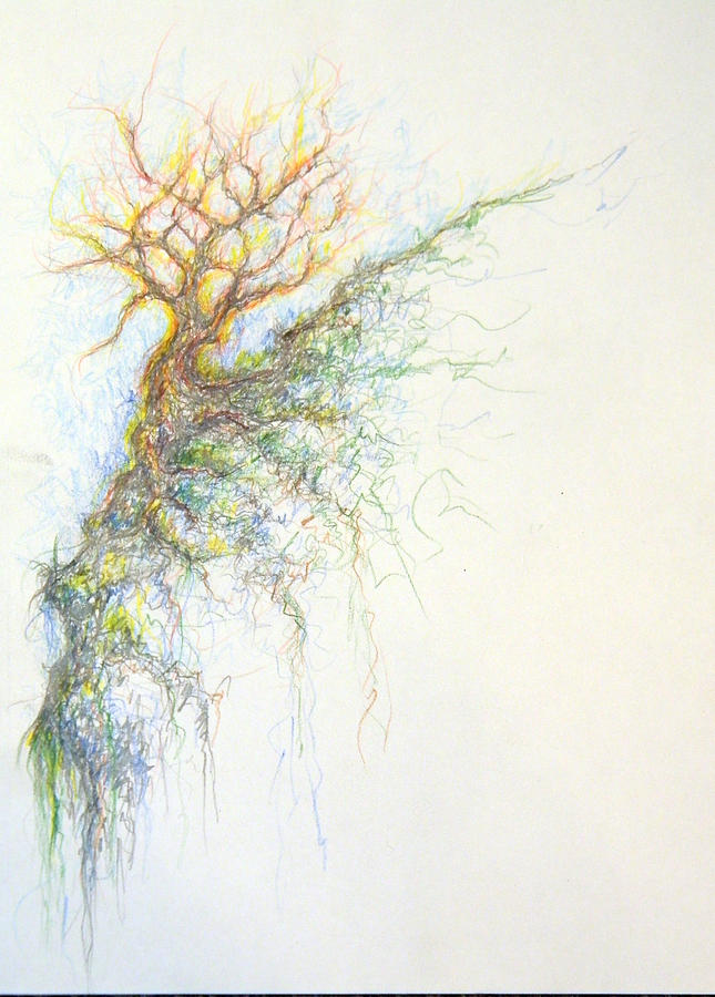 Color Pencil Drawing - Burning Bush by David  Maynard