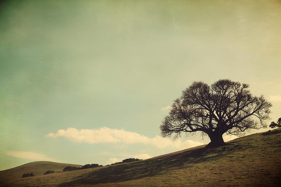 Landscape Photograph - But I Still Need You by Laurie Search