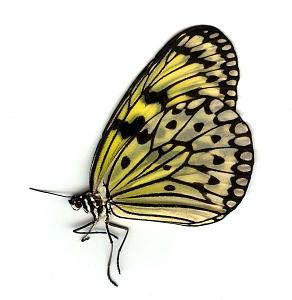 Photograph - Butterfly 1 by Steven White