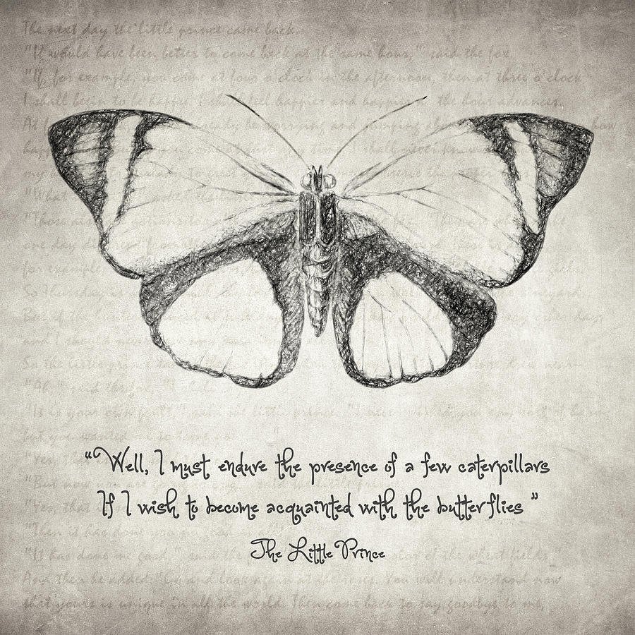 Butterfly Quote - The Little Prince is a drawing by Taylan Soyturk ...