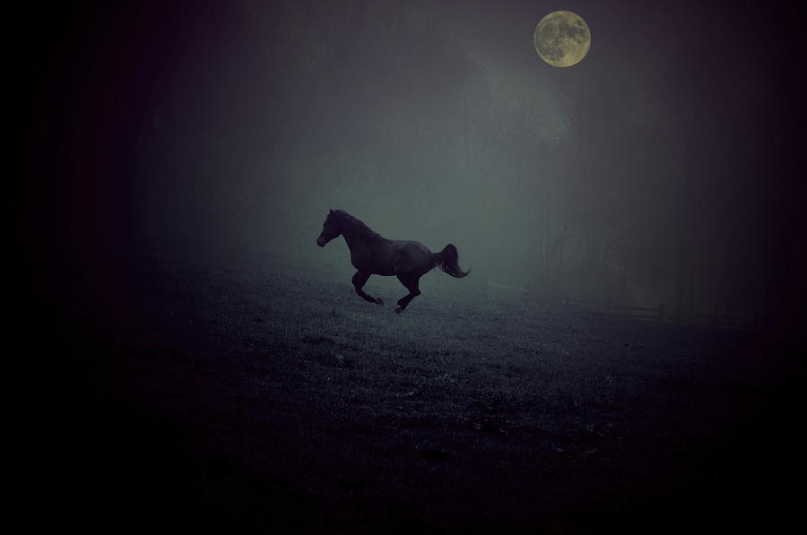 Arabian Horse Photograph - By The Moon by Emily Stauring