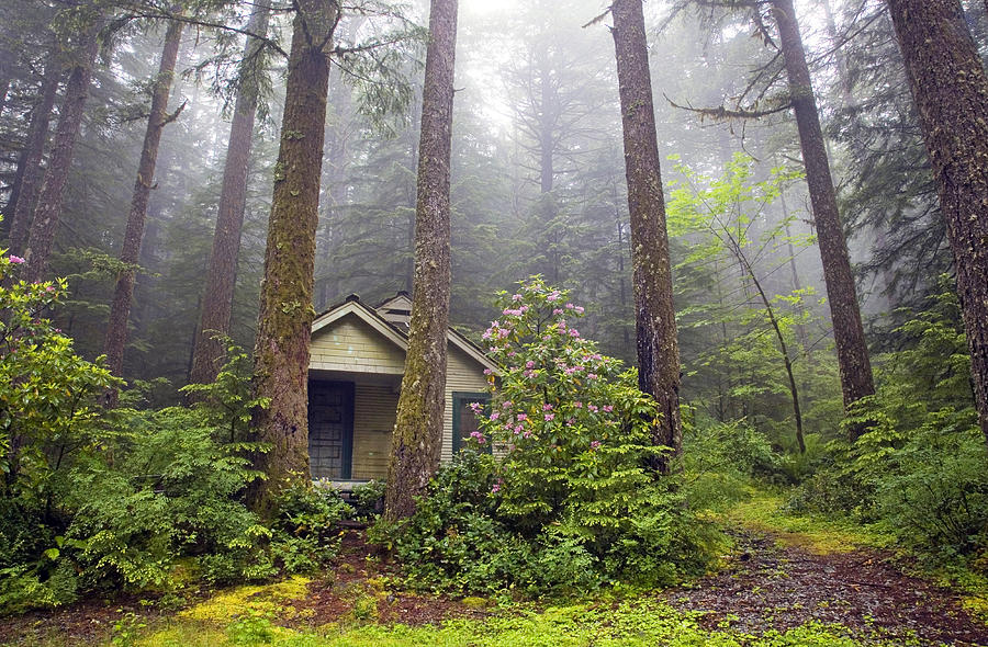 Cabin in the misty woods photograph by buddy mays for Cabin in the woods oregon
