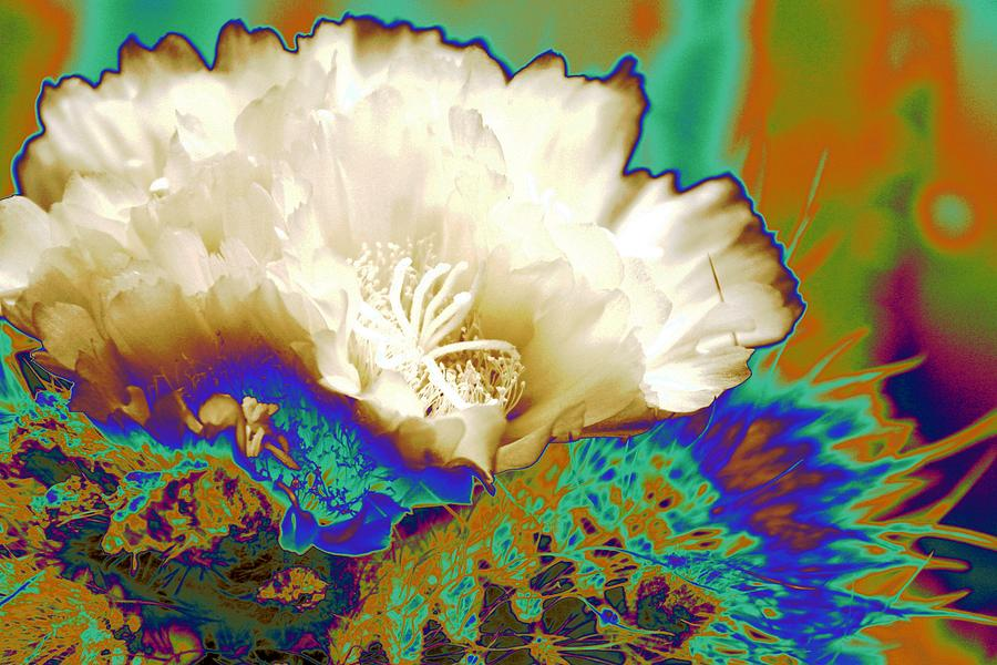 Abstract Cactus Flower Photograph - Cactus Moon Flower by  Andrea Lazar