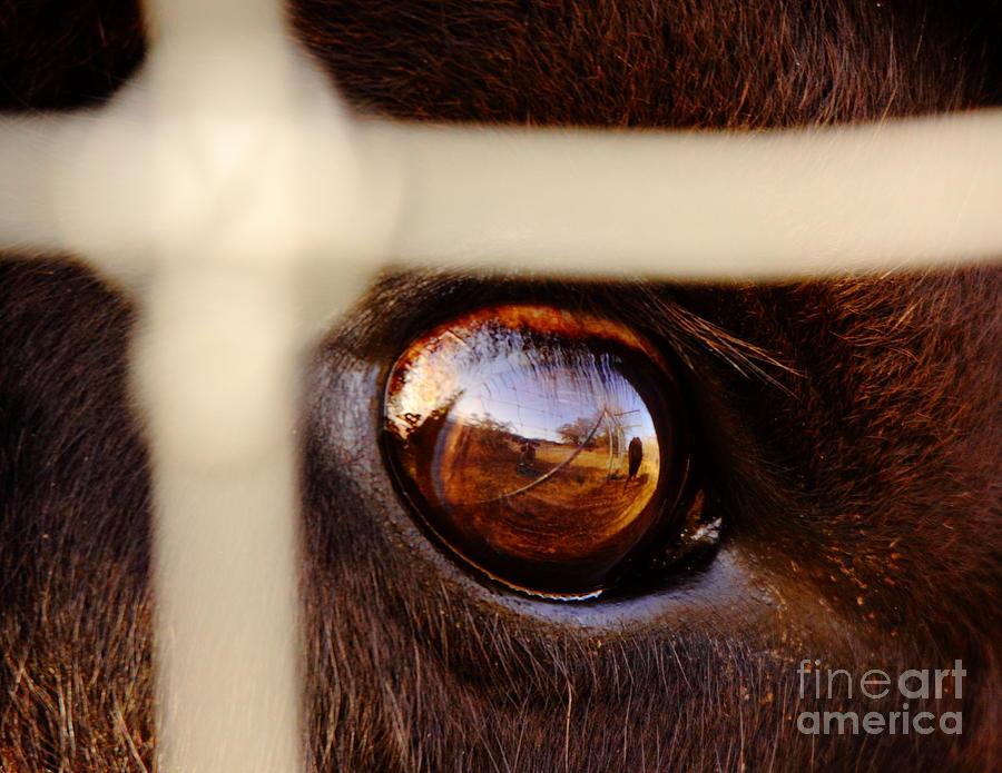 Eye Photograph - Caged Buffalo Reflects by Robert Frederick
