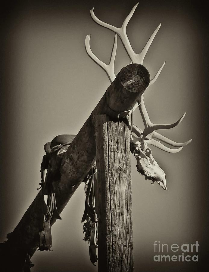 Ranch Photograph - California Ranch Gate   by Gus McCrea