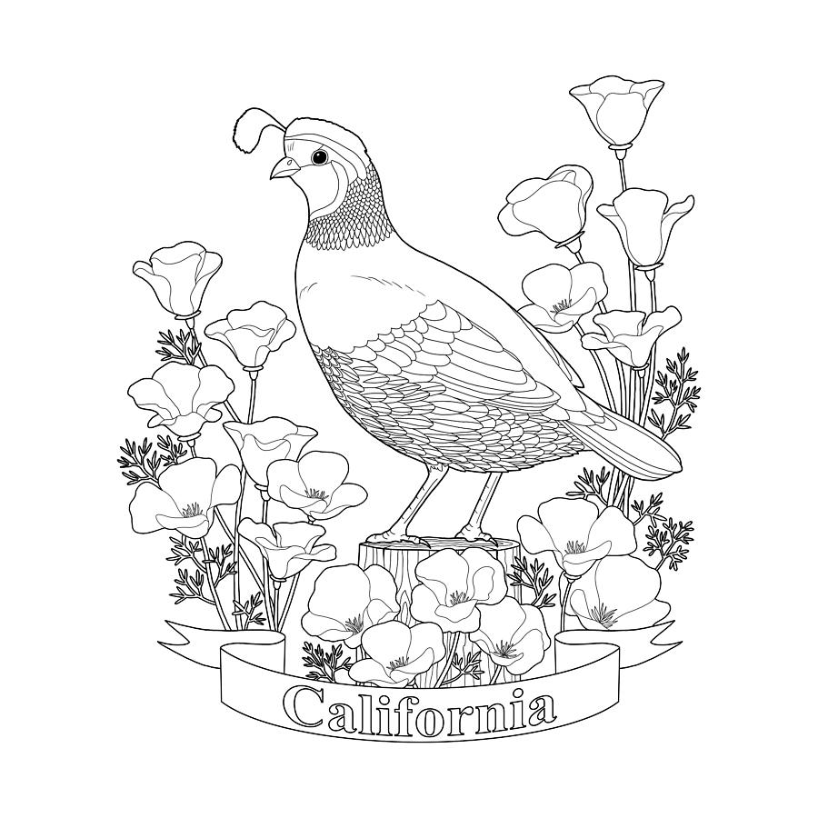 California State Bird And Flower Coloring Page Digital Art