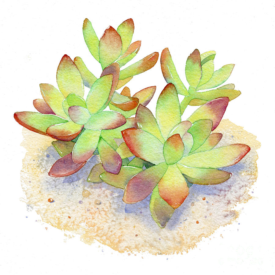 Succulents Paintings Images