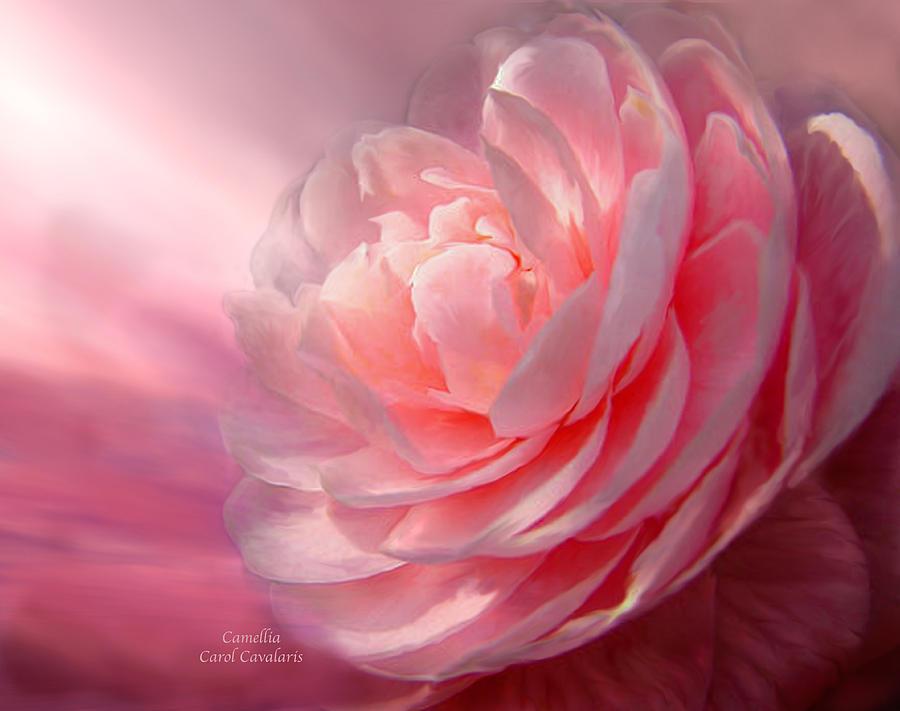 Camellia Mixed Media