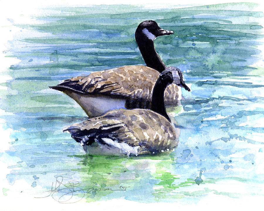 Canada Painting - Canada Geese by John D Benson