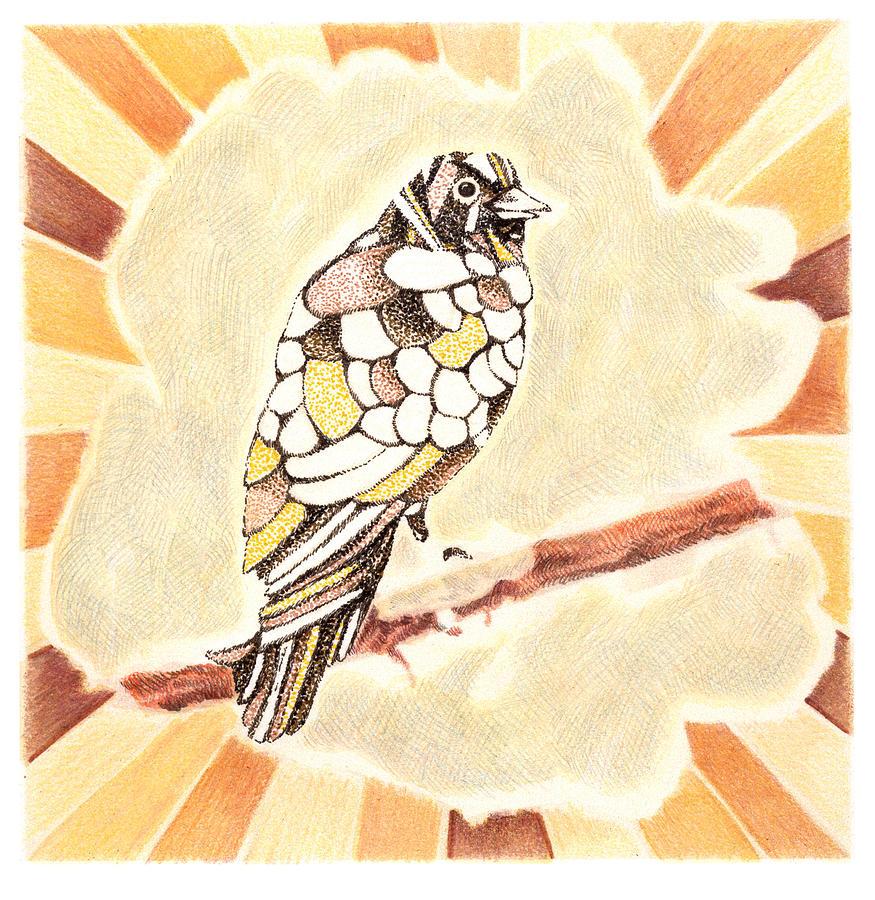 Karl Drawing - Canary by Karl Frey