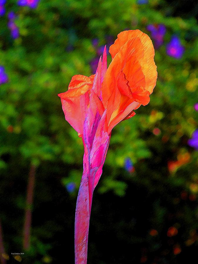 Canna Lily Painting - Canna Lily With Althea by Fred Jinkins