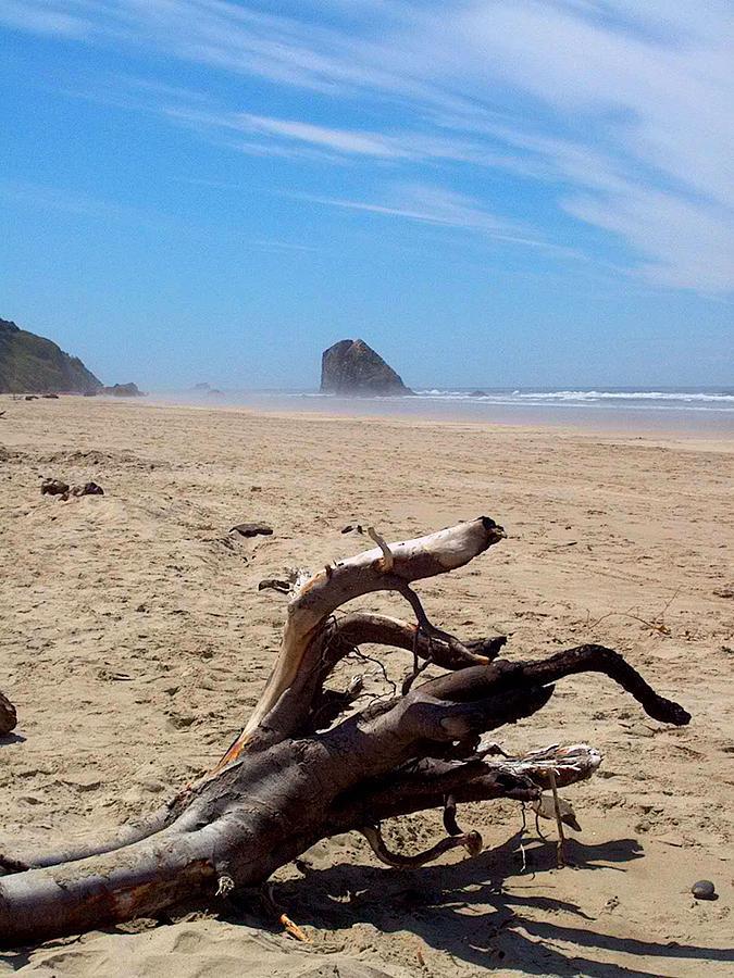 Driftwood Photograph - Cannon Beach Driftwood by Lori Seaman