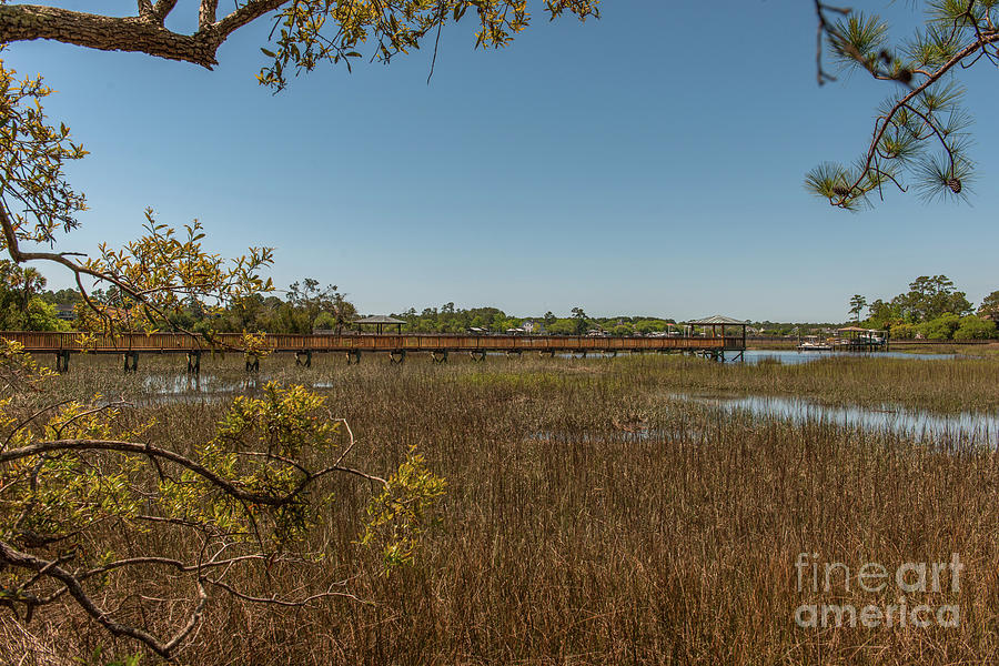 Cardinal Hill Salt Marsh Photograph
