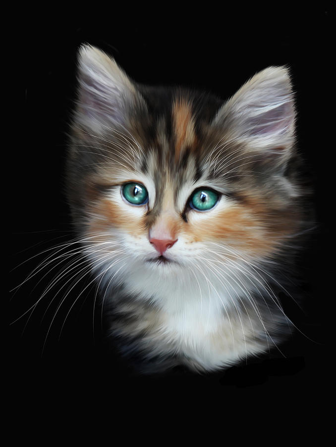 Kitten Digital Art - Cassiopeia  by Julie L Hoddinott