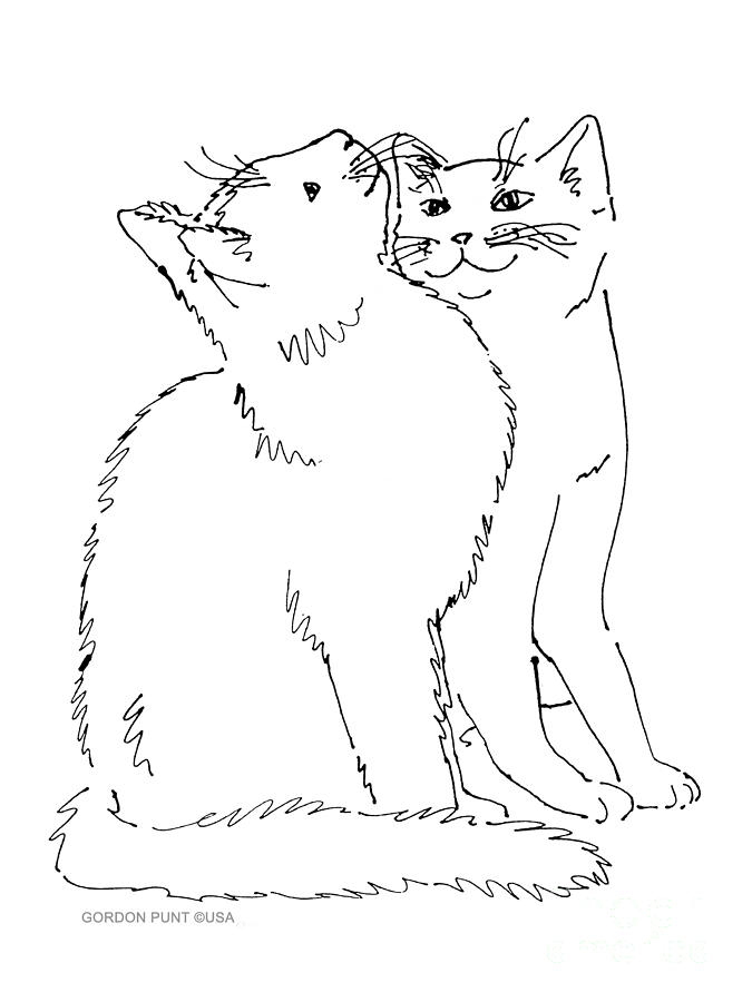 Line Drawing Of Cat : Cat art curious drawing by gordon punt
