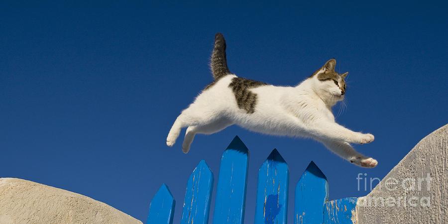 Cat Photograph - Cat Jumping A Gate by Jean-Louis Klein & Marie-Luce Hubert