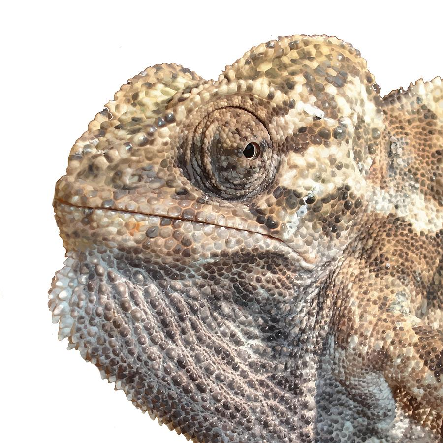 chameleon with sinister facial expression isolated