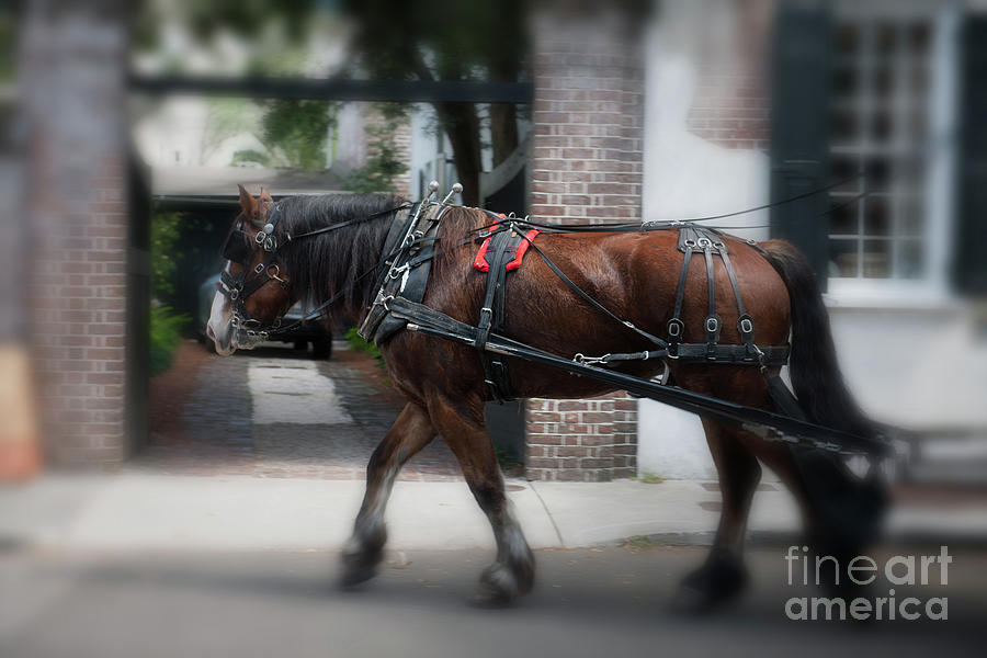 Charleston Carriage Ride Photograph