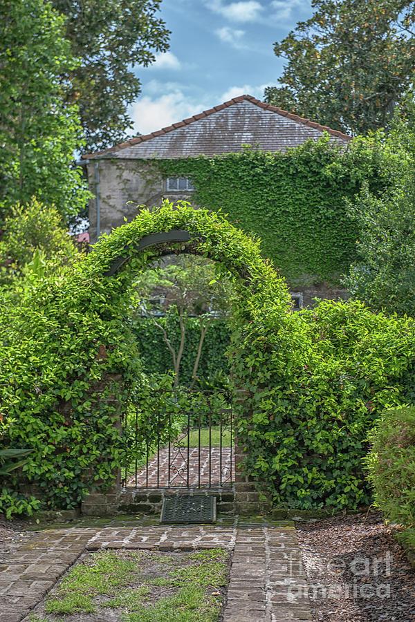 Charleston Garden Ivey Photograph