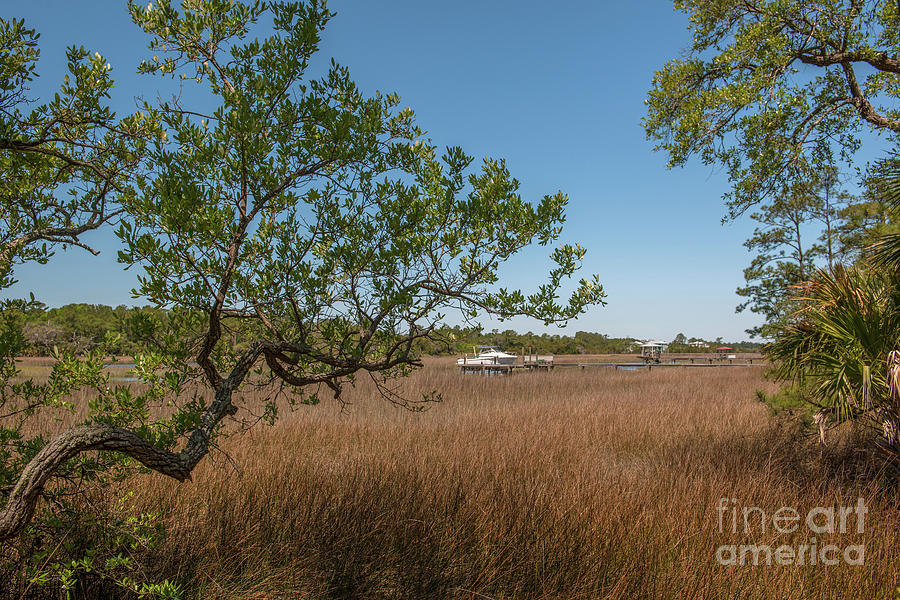 Charleston Lowcountry Salt Marsh Photograph