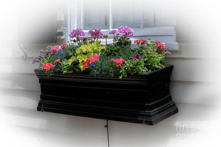 Charleston Window Box Photograph