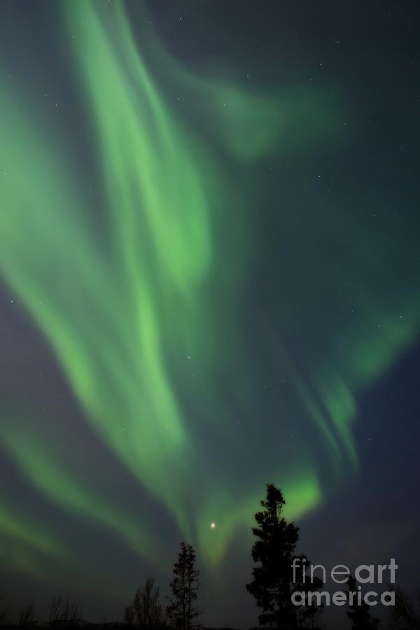 Norhtern Ligths Photograph - chasing lights II natural by Priska Wettstein