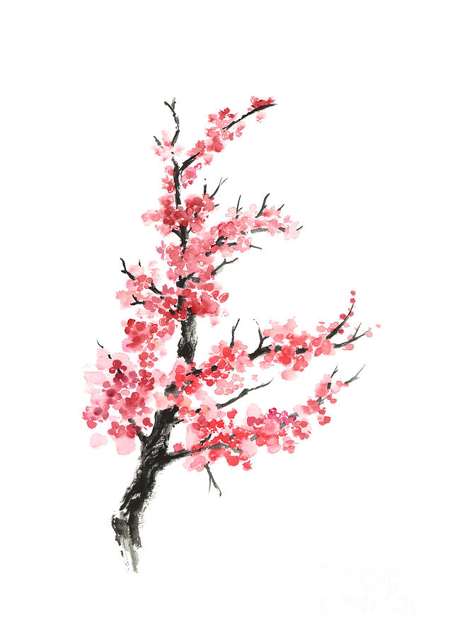 cherry blossom branch - photo #18