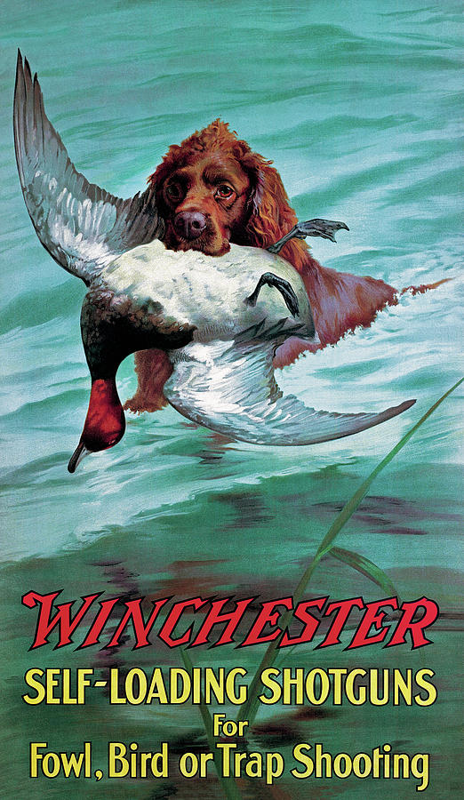 Retriever Painting - Chesapeake Retriever With Duck by Unknown