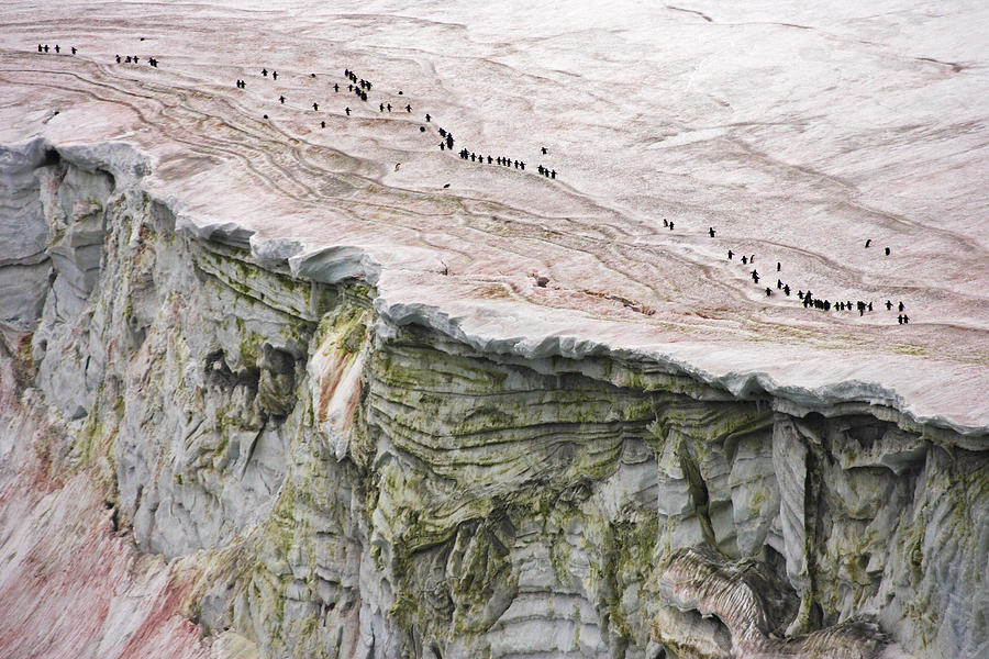 Outdoors Photograph - Chinstrap Penguins Crossing An by Maria Stenzel