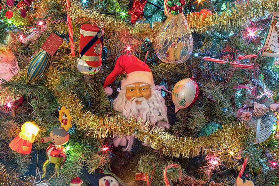 Christmas Tree Delight Photograph