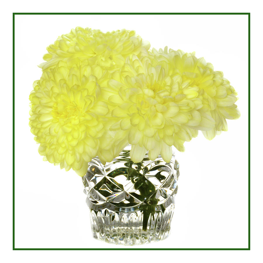 Chrysanthemums In Crystal Photograph
