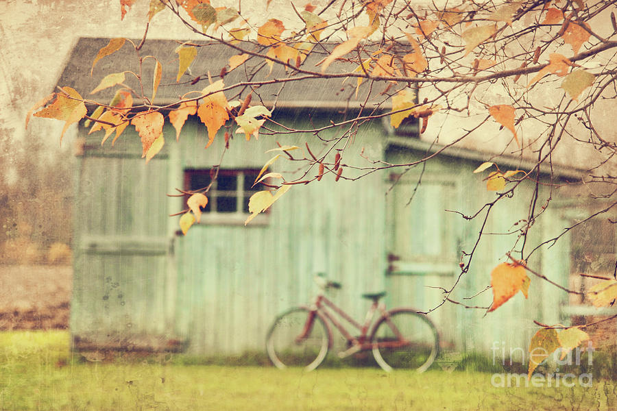 Closeup Of Leaves With Old Barn In Background Photograph