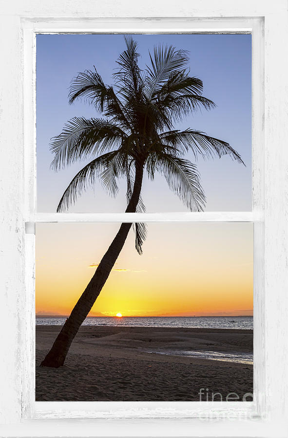 Coconut Palm Tree Tropical Sunset Window View Photograph