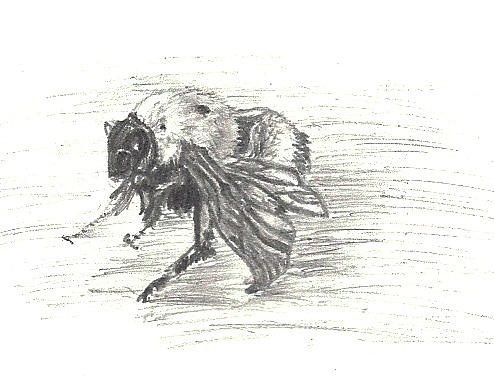 Bumblebee Insect Drawing Cold Bumblebee Drawing...