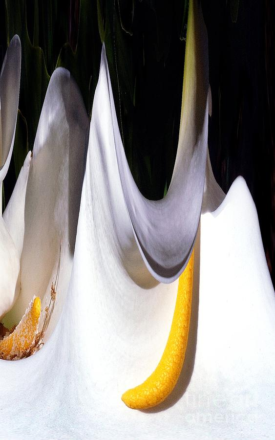 Digital Art Photograph - Cold Calla Poles by Norman  Andrus