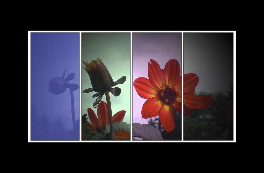 Color My World Digital Art