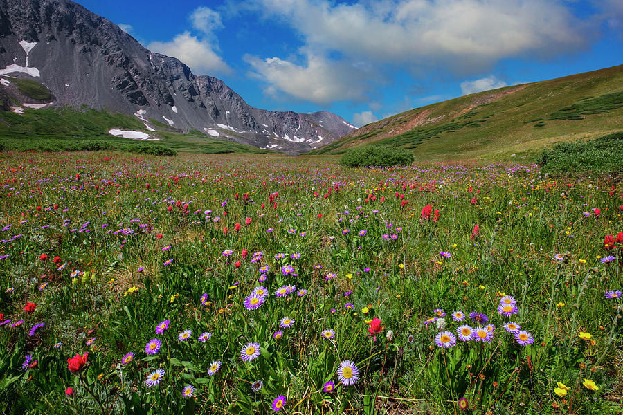 Colorado Wildflowers In Stevens Gulch 1 Photograph