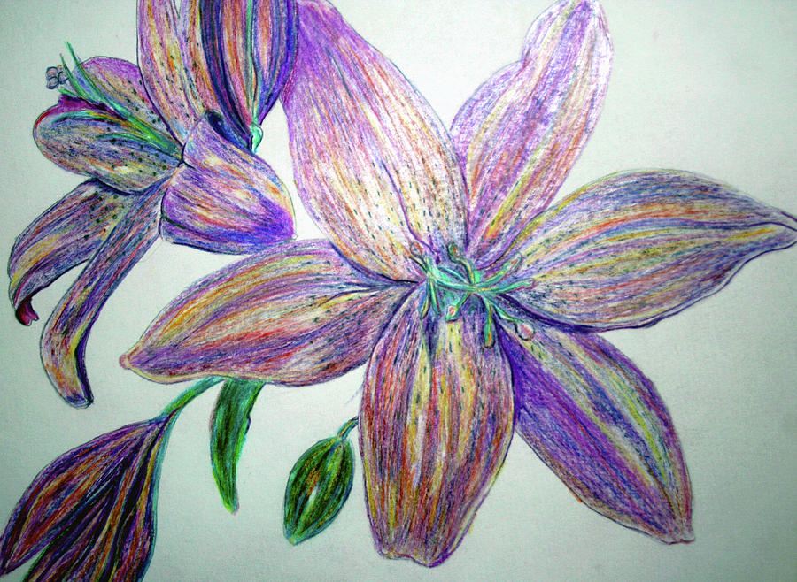 Colored Pencil Flowers Drawing by Lisa Stanley