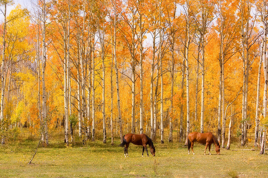 Country Photograph - Colorful Autumn High Country Landscape by James BO  Insogna