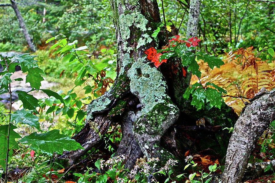 Tree Photograph - Colorful Stump by Diana Hatcher