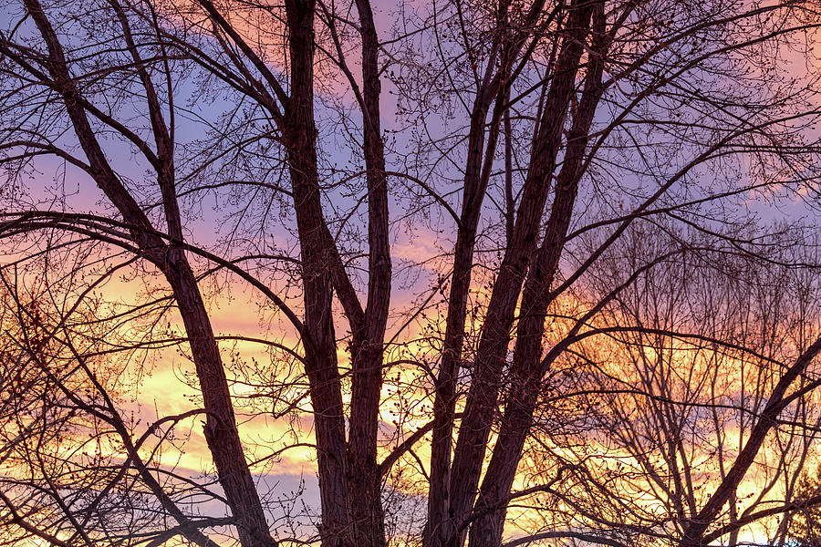 Colorful Tree Branches Night Photograph