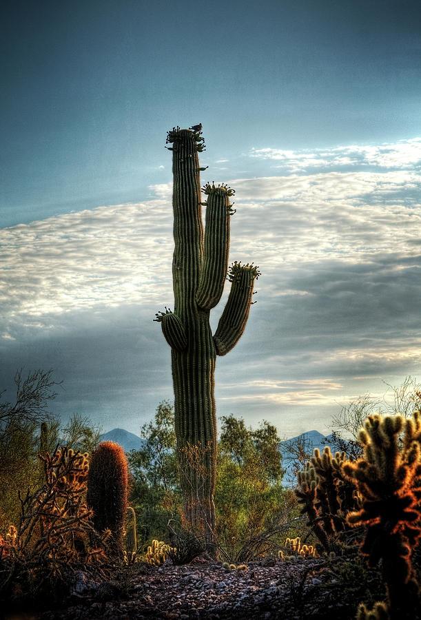 Arizona Photograph - Colors Of The Morning  by Saija  Lehtonen