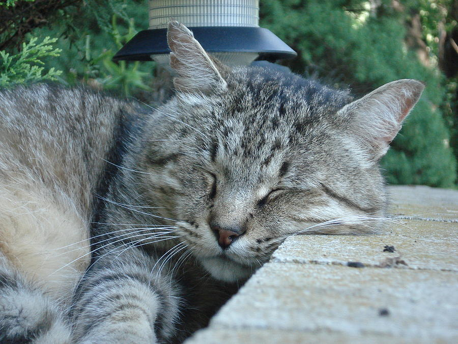 Cat Photograph - Comfortable by DB Artist