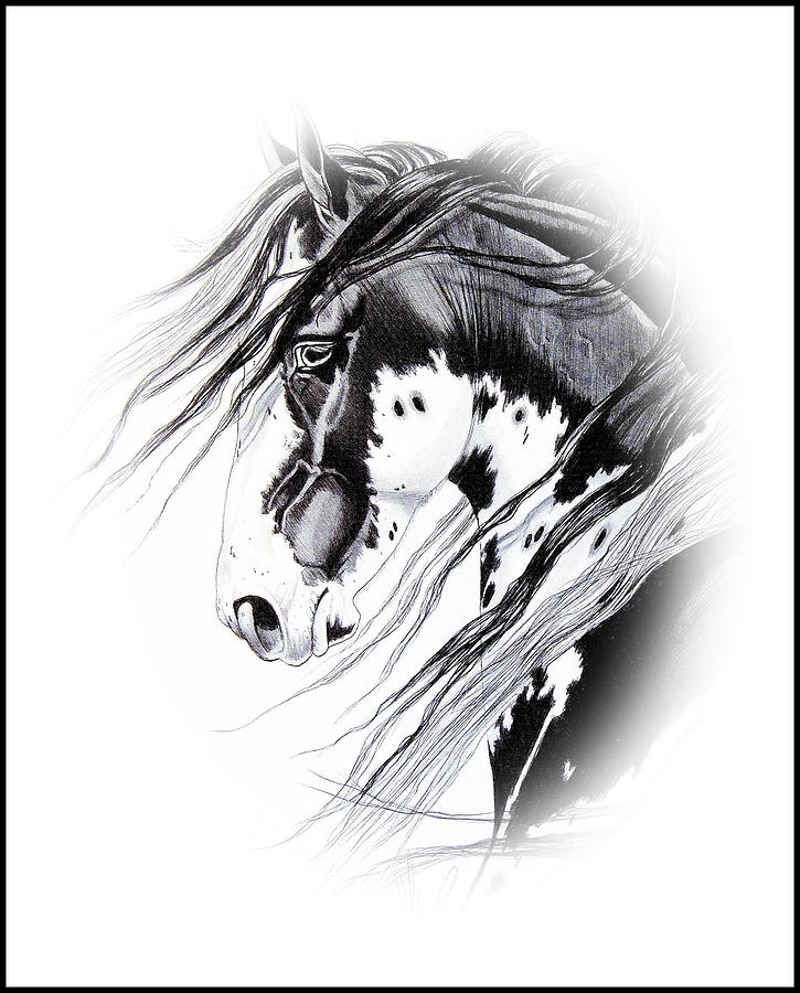 Horse Drawing Drawing - Commanche by Cheryl Poland