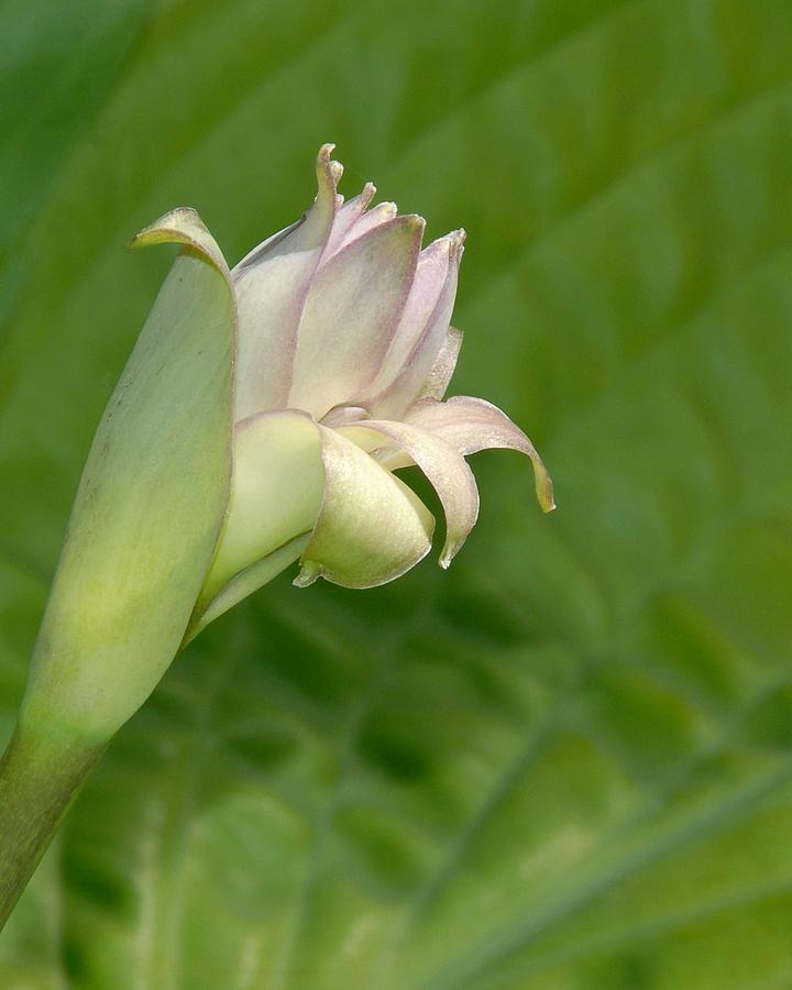 Plant Photograph - Confidant Smile by Bill Kellett