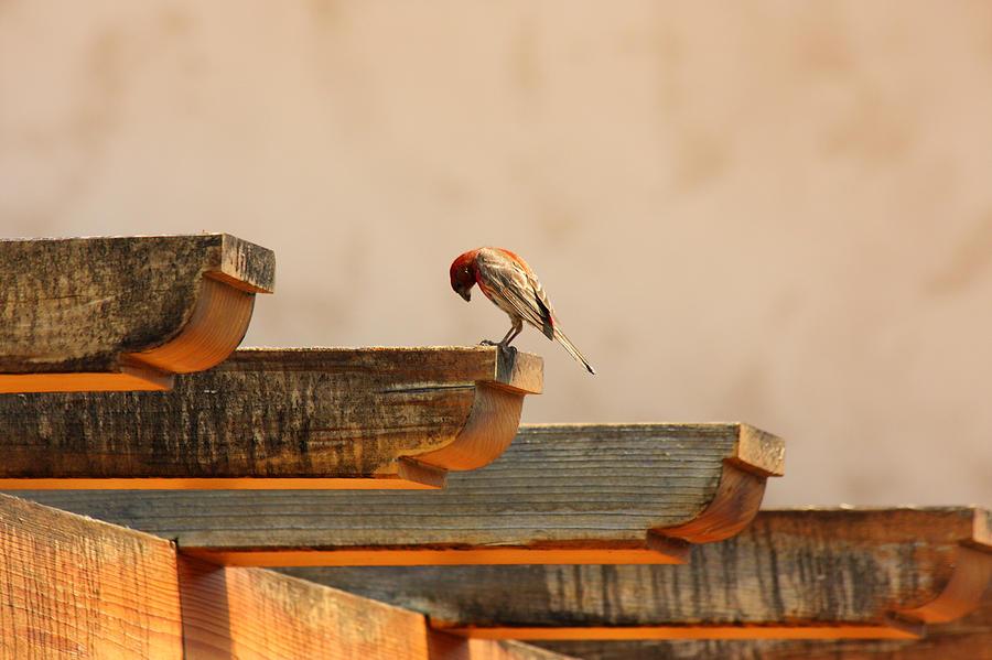 Bird Photograph - Contemplation by Rebecca Cozart