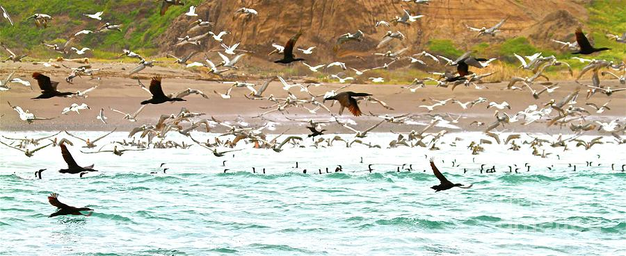 Cormorants Photograph - Cormorant Flight In Frenzy by Gus McCrea