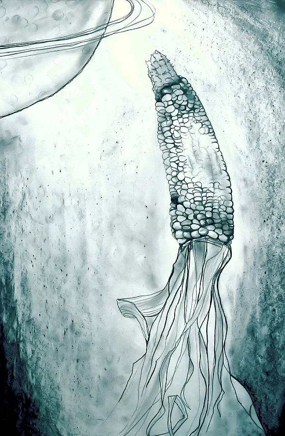 Corn Drawing - Corn In Space by Michelle Calkins