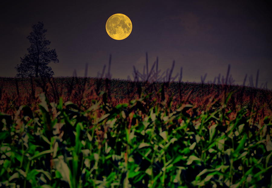 Cornfield Moon Tree Photograph